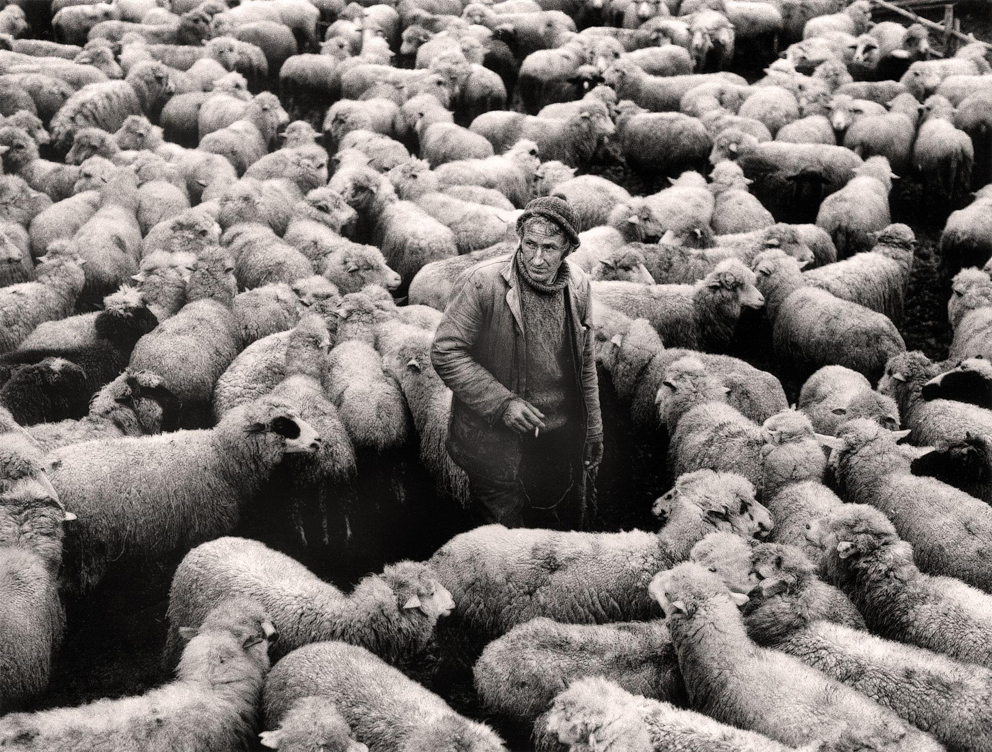 The Shephard With The Flock | Jacko Vassilev – The Joy of Freedom | Luz Art Los Angeles, CA